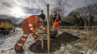 Tree being planted for the Watermead Memorial Walk
