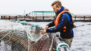 Handout image from Scottish Sea Farms