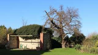Mulberry tree at Heacham Manor Hotel