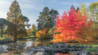 View of Cambridge University Botanic Garden include autum colour trees and ponds