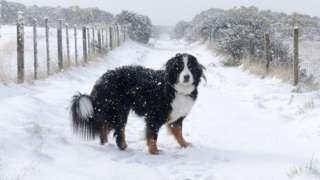dog in snow in Tain