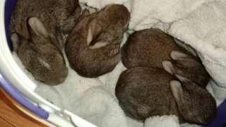 Rescued bunnies