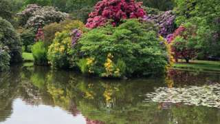 Trees reflected in water at Biddulph Grange Gardens in Staffordshire