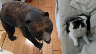 cat and bear