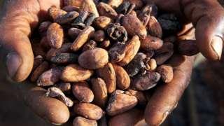 안에 코코아 씨앗을 제외한 흰 과육 부분과 껍질은 폐기된다