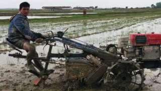 ရခိုင်ပြည်နယ် မြောက်ပိုင်းနဲ့ အလယ်ပိုင်းက မြို့နယ်တွေမှာ စပါးမစိုက်နိုင်တဲ့ လယ်မြေတွေများ