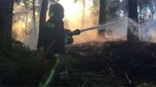 Fighting woodland fire near Alton