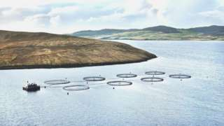 Grieg Seafood salmon farm in Shetland