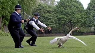 Nick Frost and Simon Pegg in Hot Fuzz chasing a swan