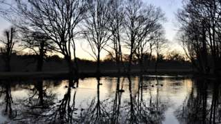 Trees reflected in water in the grounds of Trent Country Park in London