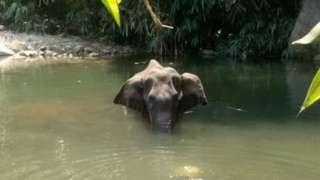 हत्ती
