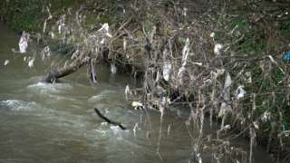 Rubbish caught on trees on the banks of the Taff near Forest Farm Country Park