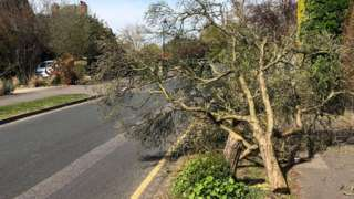 A cut-down tree in Surrey