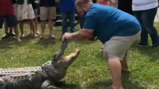 A screen grab from a video, showing a man putting a watermelon in an alligator's mouth