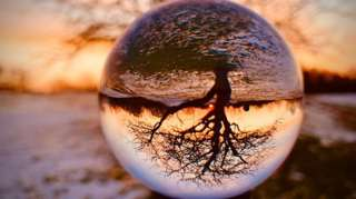 Tree through a lensball