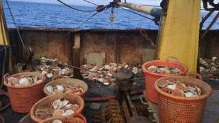 Shellfish on fishing boat