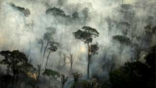 Amazon rainforest on fire.