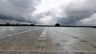 Tŷ gwydr Low Carbon Farming