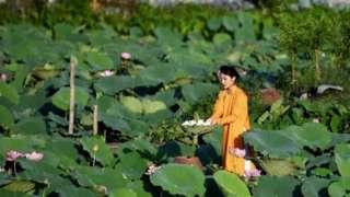 Một đầm sen ở Hà Nội
