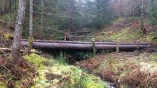 Whinlatter dam