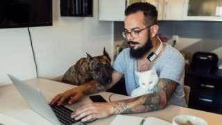 мужчина собака и кот за компьютером