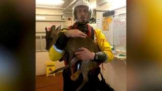 Myles Hussey holds rescued deer 'Ebbing'