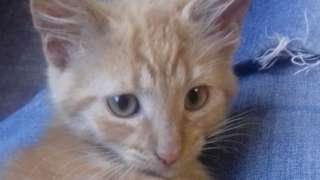 Kitten called Angus