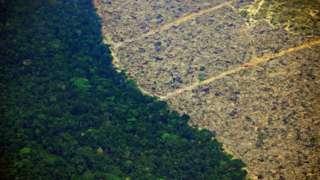 Área deforestada frente a área verde.