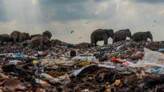 Стадо слонов роется на свалке в поисках еды.
