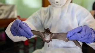Researcher with a bat in his hand, working in a lab