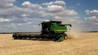 Fields of barley in Western Australia