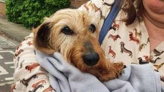 Rikki the dachshund
