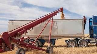 A grain auger at work in Australia