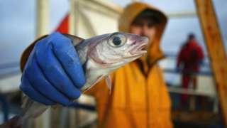 Scottish fisherman