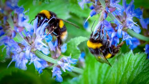 Two bees on flowers