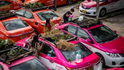 Thai staff members of the Ratchaphruek Taxi Cooperative water their community vegetable garden that was built on top of out of use Thai taxis on September 13, 2021 in Bangkok, Thailand.