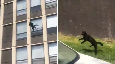 Cat jumps from building