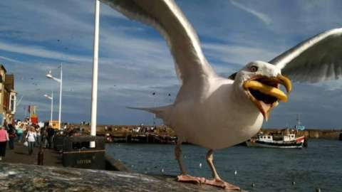 The seagull picture