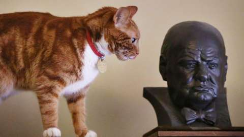 A cat next to a bust of Winston Churchill