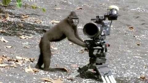 A monkey examines a camera