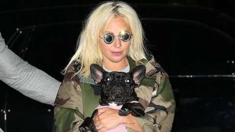 Lady Gaga seen with her bulldog in New York, June 2015
