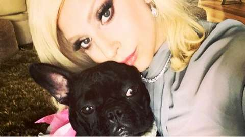 Lady Gaga and her bulldog, Miss Asia