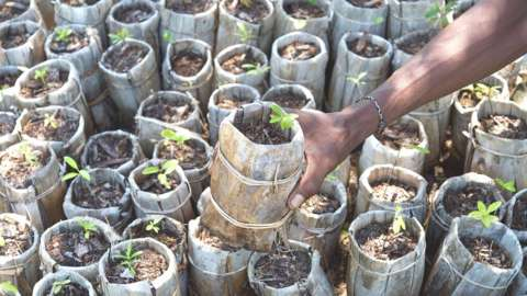 Person's hand holding small tree pot before planting