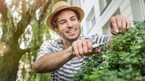 Young man pruning bush in garden