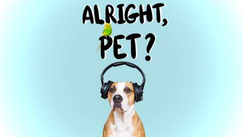 Alright Pet? Podcast