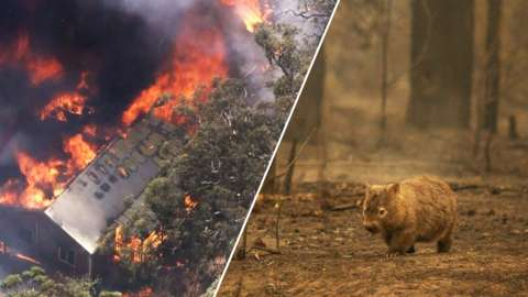 Images of wildfires and wildlife