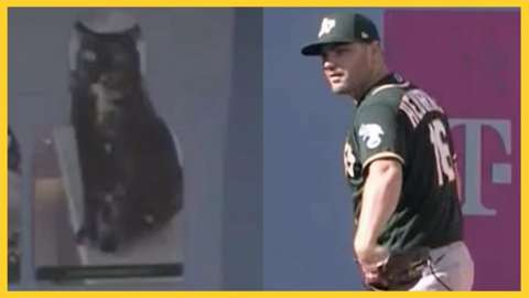 Baseballer brings cardboard cut out of cat to match