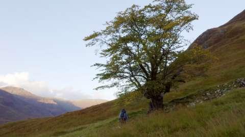 Elm tree in Glen Affric