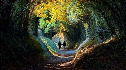 Two people walk down a tree-lined path