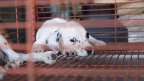 Stock image of a puppy in a cage